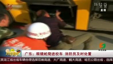 廣東:眼鏡蛇爬進校車 消防員及時處置