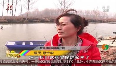 """樺南:混入家禽界 """"豆雁""""身份被揭開"""