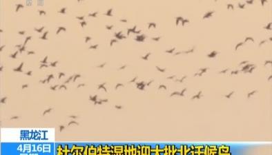 黑龍江:杜爾伯特濕地迎大批北遷候鳥