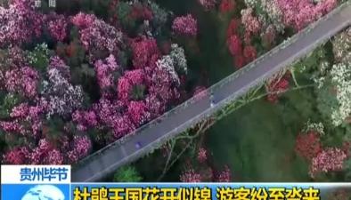 貴州畢節:杜鵑王國花開似錦 遊客紛至沓來