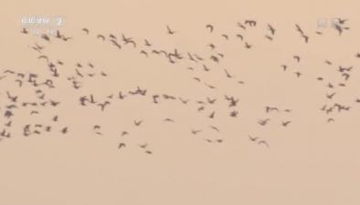 黑龍江杜爾伯特:迎候鳥遷徙高峰