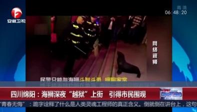 """四川綿陽:海獅深夜""""越獄""""上街 引得市民圍觀"""