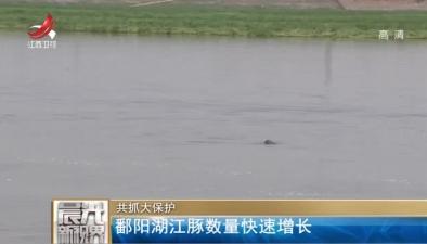 共抓大保護:鄱陽湖江豚數量快速增長