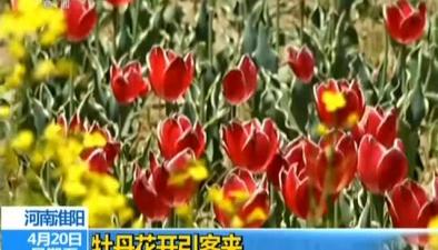 遼寧:萬畝梨花香似海 遊人紛至沓來