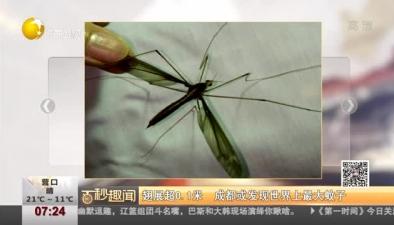 展翅超0.1米 成都或發現世界上最大蚊子