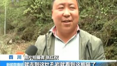四川:黃龍自然保護區拍攝到大熊貓活動