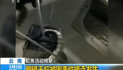 雲南:蛇類活動頻繁 眼鏡王蛇被困事件接連發生
