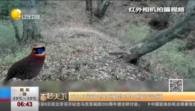甘肅白水江國家級自然保護區捕捉到4對野生大熊貓母子活動畫面