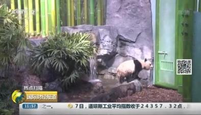 加拿大:熊貓安新家 賣萌吸金兩不誤