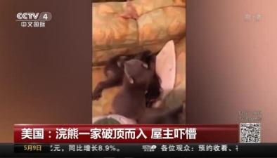 美國:浣熊一家破頂而入 屋主嚇懵