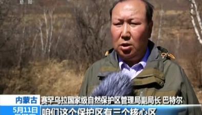 內蒙古:賽罕烏拉保護區野生斑羚數量增加