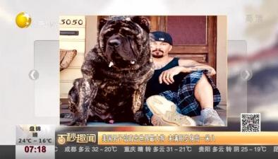 美國男子培育出世界最大狗 未滿周歲身高一米八