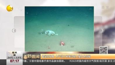 最深垃圾堆 太平洋萬米海溝現大量白色垃圾