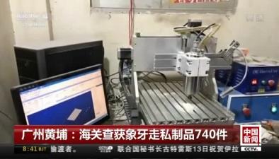 廣州黃埔:海關查獲象牙走私制品740件