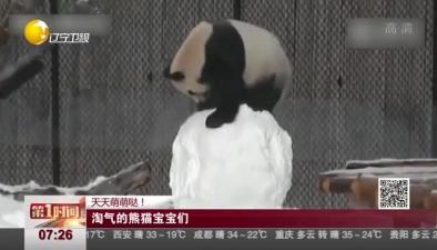 天天萌萌噠! 淘氣的熊貓寶寶們