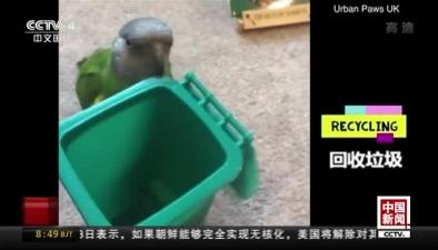 """""""網紅""""鸚鵡 會打籃球倒垃圾"""