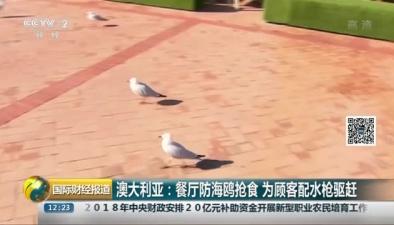 澳大利亞:餐廳防海鷗搶食 為顧客配水槍驅趕