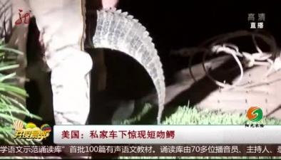 美國:私家車下驚現短吻鱷
