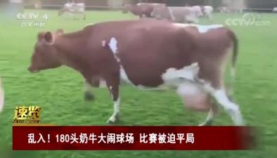 亂入!180頭奶牛大鬧球場 比賽被迫平局