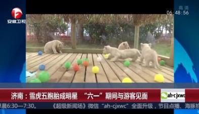 """濟南:雪虎五胞胎成明星 """"六一""""期間與遊客見面"""