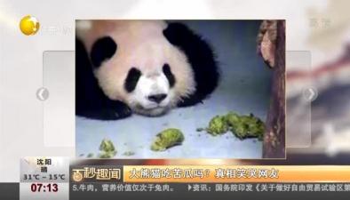 大熊貓吃苦瓜嗎?真相笑哭網友
