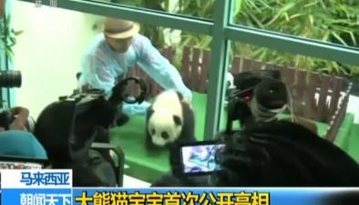 馬來西亞:大熊貓寶寶首次公開亮相