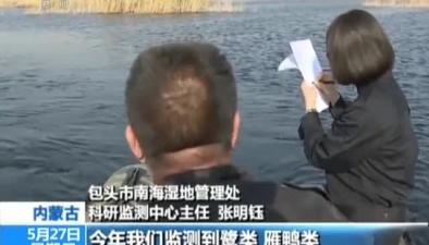 內蒙古:南海子濕地迎來鳥類繁殖季
