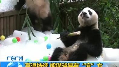 """廣東廣州:高溫持續 熊貓消暑有""""涼""""方"""