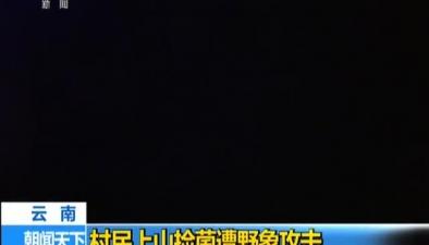 雲南:村民上山撿菌遭野象攻擊