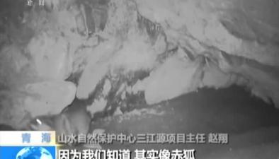 三江源:水獺 豹貓爭奪領地