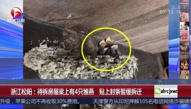 浙江松陽:待拆房屋梁上有4只雛燕 貼上封條暫緩拆遷