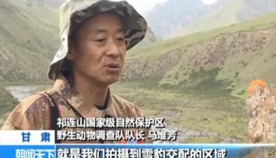 四川甘孜:牧民偶遇野生雪豹