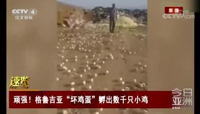 """頑強!格魯吉亞""""壞雞蛋""""孵出數千只小雞"""