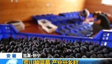 安徽:荒山種藍莓 産業興鄉村