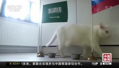 """2018年俄羅斯世界杯開賽在即:""""貓咪預測官""""出戰世界杯"""