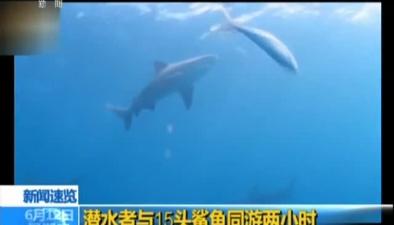 潛水者與15頭鯊魚同遊兩小時