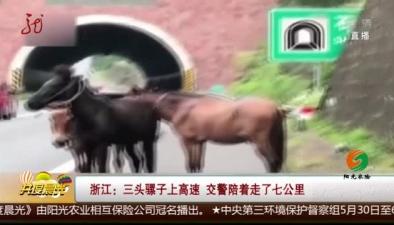 浙江:三頭騾子上高速 交警陪著走了七公裏