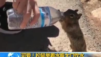 可愛!松鼠舉著水瓶大口飲水