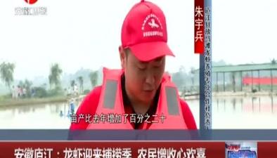 安徽廬江:龍蝦迎來捕撈季 農民增收心歡喜