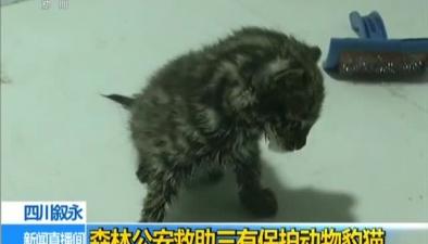 四川敘永:森林公安救助三有保護動物豹貓