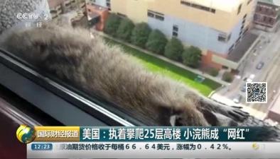 """美國:執著攀爬25層高樓 小浣熊成""""網紅"""""""