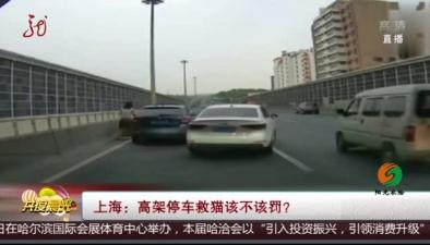 上海:高架停車救貓該不該罰?