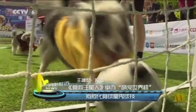 """《營救汪星人》舉辦""""萌寵世界杯"""":狗狗化身球星秀球技"""