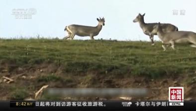 四川:大熊貓國家公園重點實驗室挂牌