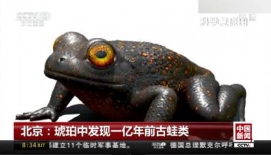 北京:琥珀中發現一億年前古蛙類