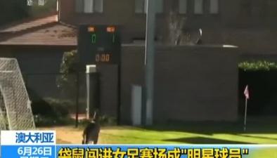 """澳大利亞:袋鼠闖進女足賽場成""""明星球員"""""""