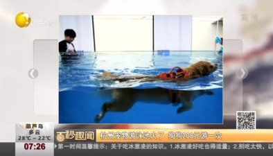 杭州寵物遊泳池火了 狗狗208元遊一次