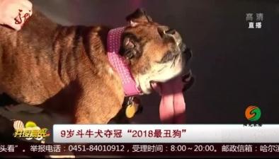 """9歲鬥牛犬奪冠""""2018最醜狗"""""""