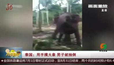 泰國:用手摸大象 男子被抽倒