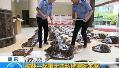 南寧海關:破獲一起重大走私玳瑁標本案